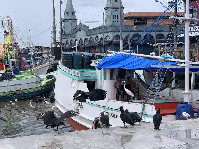 Barcos de peixe com urubus e garças e o Mercado de Ver-o- Peso (Foto: Rogério Almeida